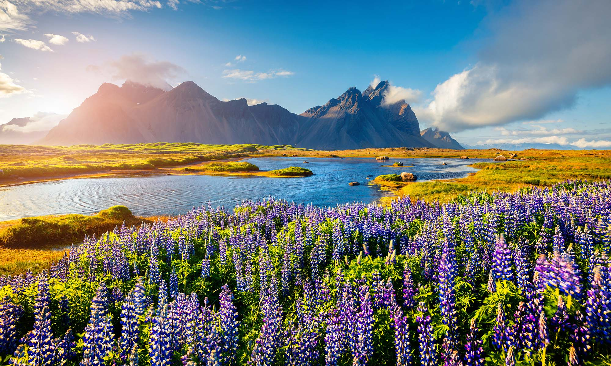 car hire rentals Iceland lake, flowers and mountains