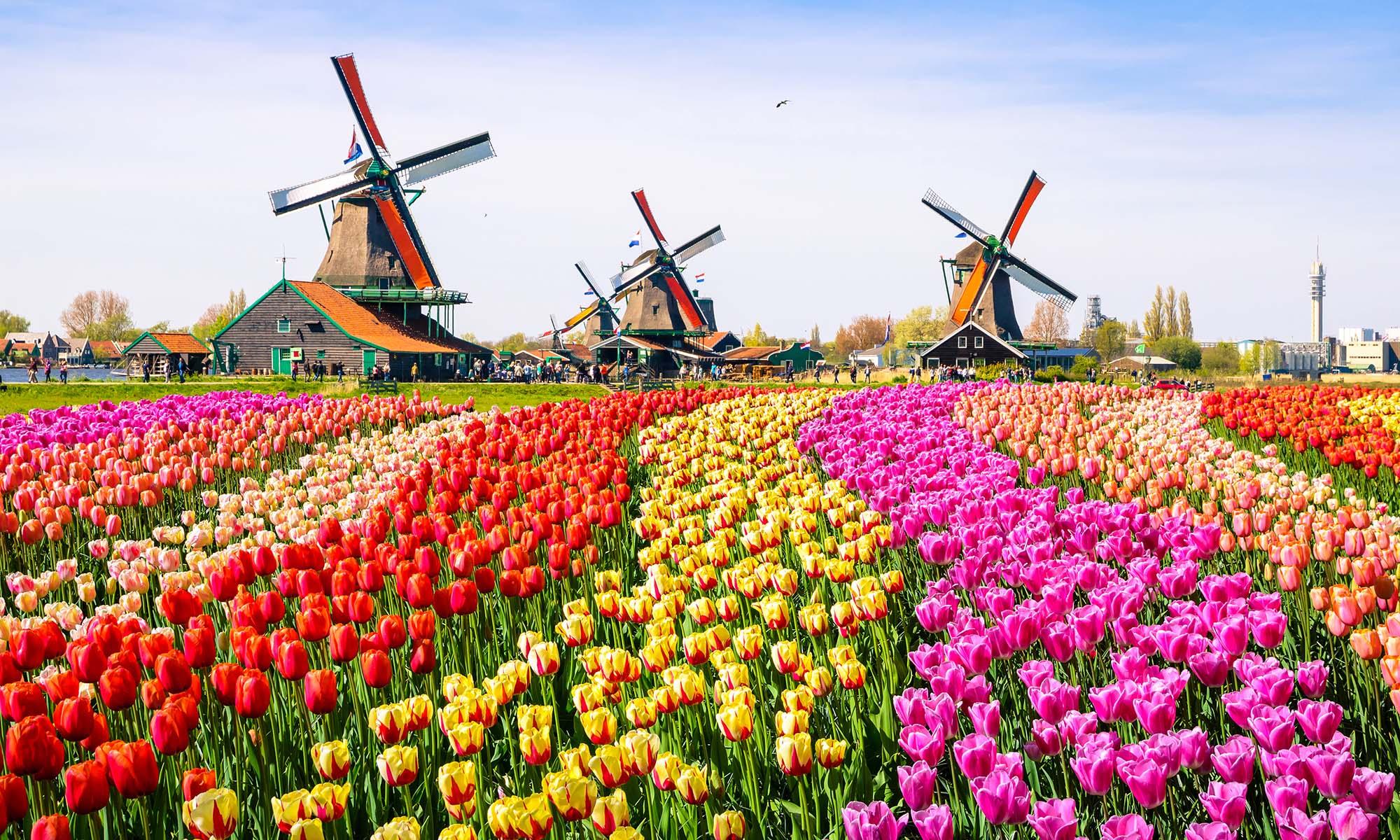 car hire rentals Netherlands windmills