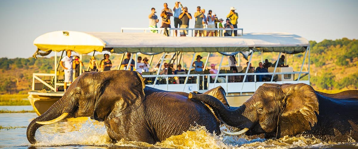 car hire rentals botswana elephant tour